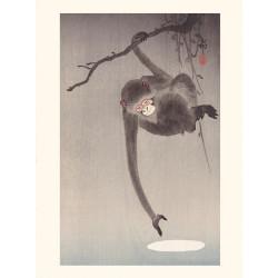 Japanese print, Monkey, Ohara Koson