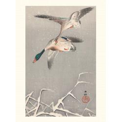 Japanese print, Mallard ducks, Ohara Koson