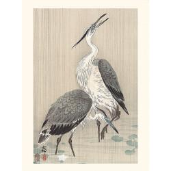 Japanese print, Gray herons, Ohara Koson