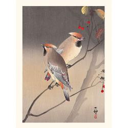 Japanese print, Versicolored pheasant, Ohara Koson