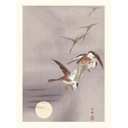 Japanese print, White-fronted geese, Ohara Koson