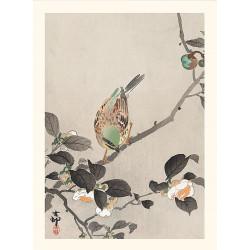 Estampado japonés, Faisán multicolor, Ohara Koson