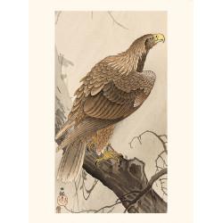 Japanese print, White-tailed eagle, Ohara Koson